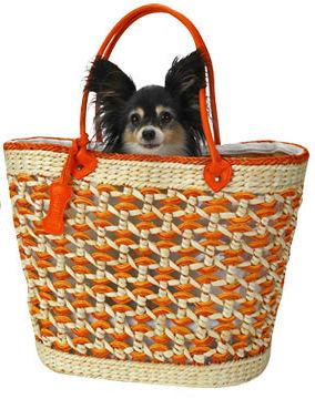 Собака в сумке.jpg