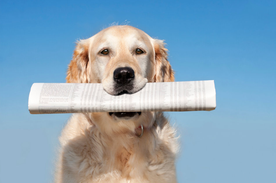 stock-photo-17900856-dog-with-newspaper.jpg
